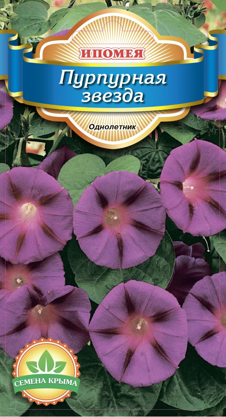 Цветок ипомея пурпурная райские звезды фото